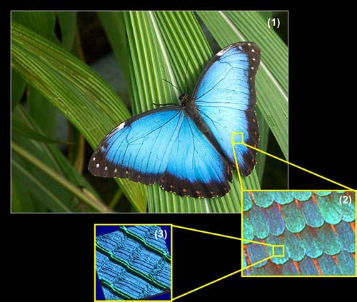 Blue Morph : Research : Image/Nano-Optics