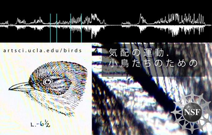 EXHIBITION: BIRD SONG DIAMOND // 11.06.14