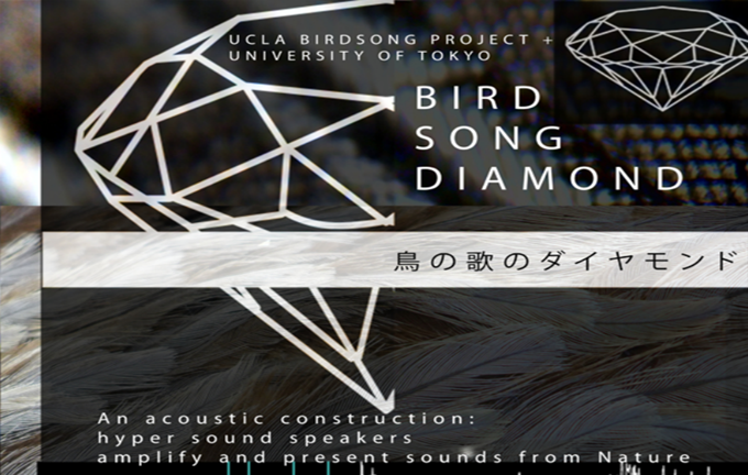 BIRD SONG DIAMOND: The Acoustic Mapping of Bird Song Networks